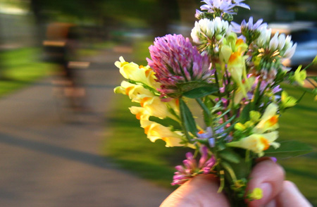 i picked you some flowers (but the photos were nicer, so i sent you those instead) - photo by jeremy clarke