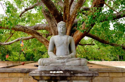 Photo of a meditating buddha statue in Sri Lanka