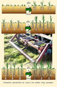 El cultivo en Línea Clave: Respetando la forma del paisaje