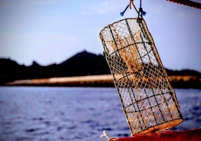 Cambio climático e invasiones biológicas: la mirada de los pescadores artesanales del Mediterráneo