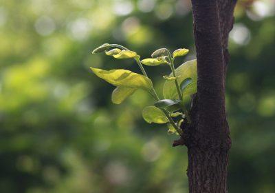 Las simbiosis entre árboles y hongos, claves para entender la evolución del clima