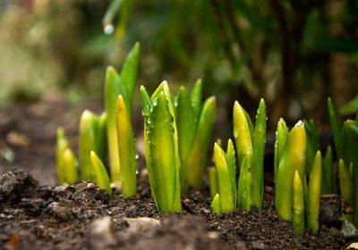 Manual de análisis de planta y suelo para sistemas agrícolas