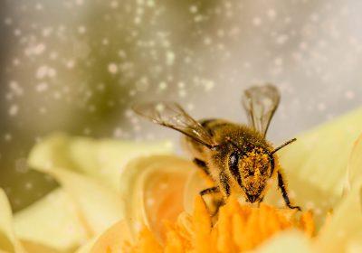 ¿Cómo evita una abeja reina la endogamia en su colonia?