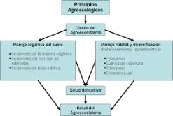 Conversión agroecológica de sistemas convencionales de producción: teoría, estrategias y evaluación