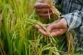 Tratado Internacional sobre los Recursos Fitogenéticos para la Alimentación y la Agricultura