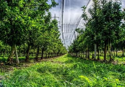 Hacia otro modelo agrario