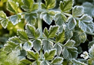 Aumenta el riesgo de heladas primaverales tardías en Europa
