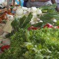¿Qué significaría triplicar nuestra producción ecológica para 2030? El punto de vista de una agricultora ecológica
