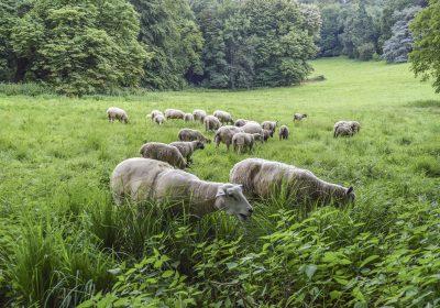 ¿Que es el Pastoreo Racional Voisin?