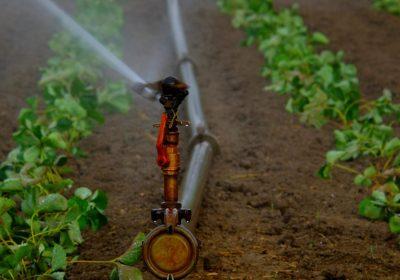 Recuperar la salud de las aguas y el cambio climático, los desafíos del regadío en el siglo XXI