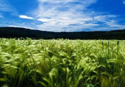 Lxs agricultorxs familiares europeos piden que se rechace el Acuerdo UE-Mercosur