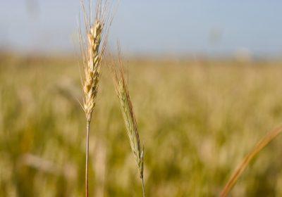 Organizaciones sociales defienden una nueva Política Agraria Común totalmente alineada con el Pacto Verde Europeo