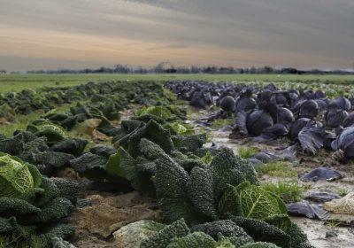 ¿Cuál es la huella de carbono del sistema agroalimentario español?