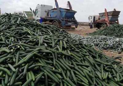 El coste ambiental de la pérdida de alimentos
