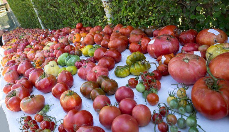 El proyecto europeo Virtigation diseñará vacunas contra las enfermedades víricas en tomates y calabacines