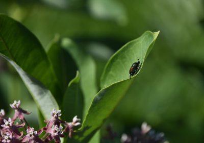 El calentamiento dispara las plagas: los insectos se reproducen más