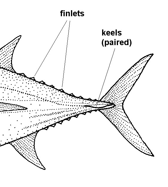 finlet diagram