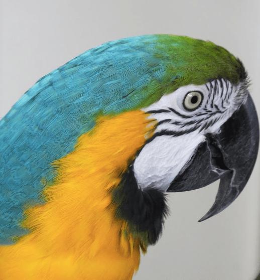 Bird beaks