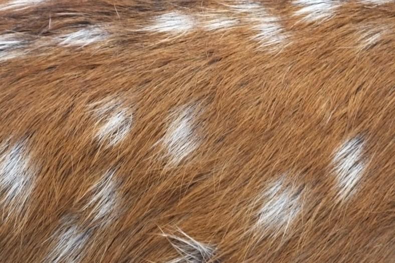 Slka Deer fur