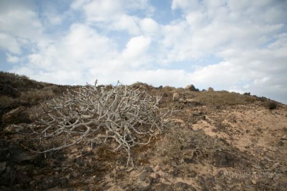 végétation volcanique