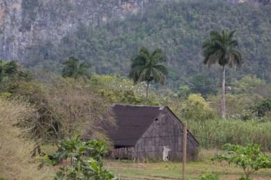 vallée de vinales - séchoir à tabac