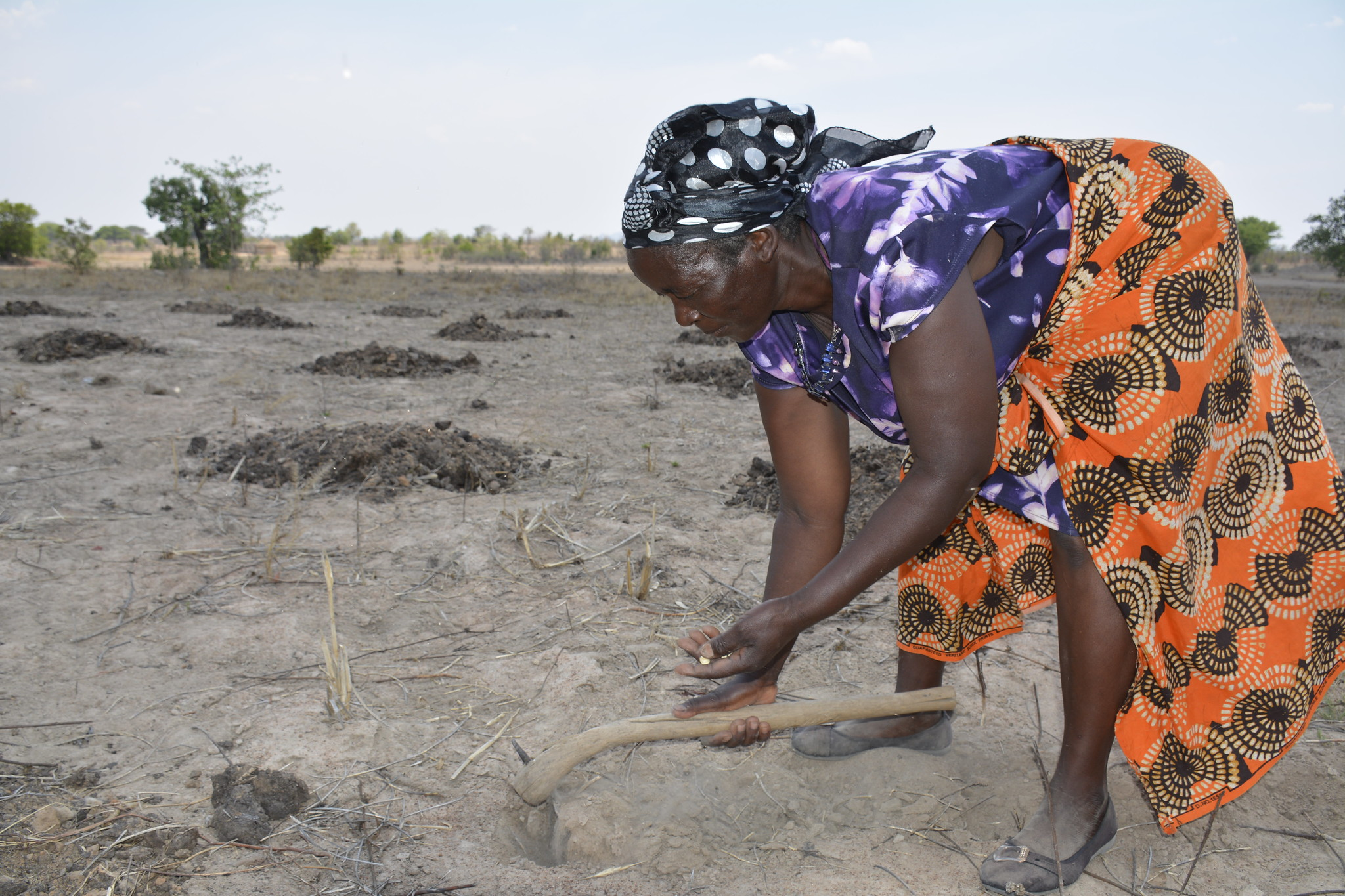 MEDIA REPORT: To manage El Nino-related crop distress in eastern and southern Africa, invest in drought-tolerant seeds and better soil and water care