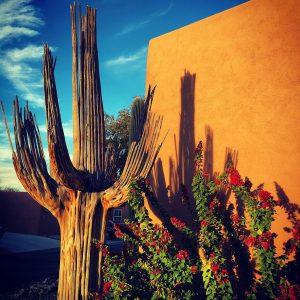 """Saguaro skeleton next to a """"barrio-style"""" home."""