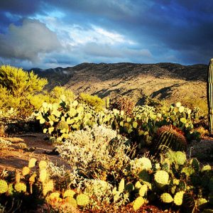 Winter in the Sonoran desert: Saguaro National Park East.