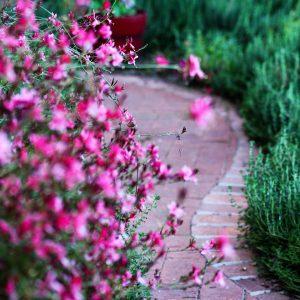 Flowers and brickwork in a Civano garden.
