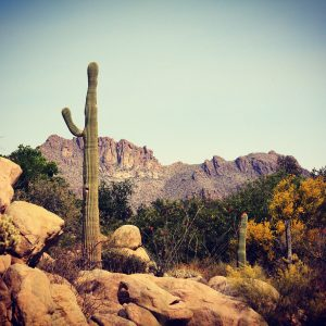 The view from the Arizona-Sonora Desert Museum's Life on the Rocks exhibit.