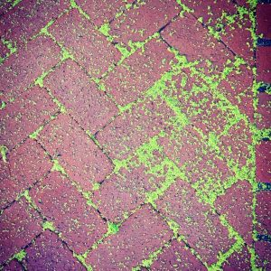 Mesquite flower residue after rainfall on a brick patio.