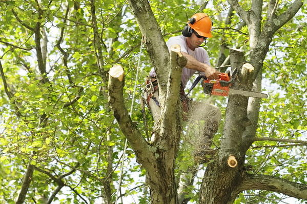Tree Trimming Service Serve a Variety of Purposes