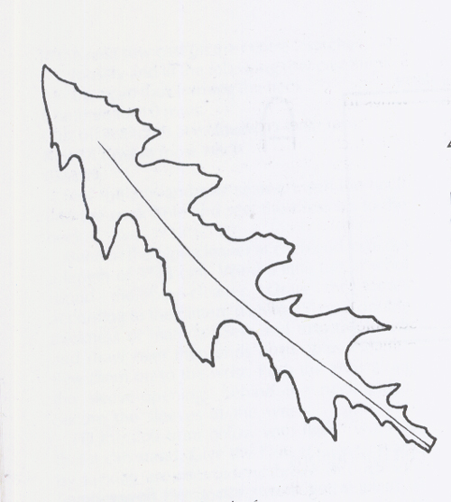 palm leaf crayon sun c colouring pages page 2