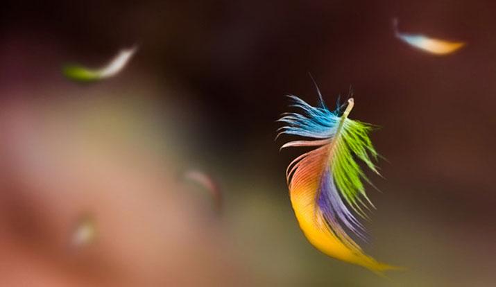 Piuma colorata trasporta un messaggio