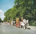 1961 Last 2 drays on parade