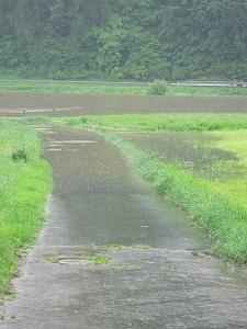 Überflutete Wege, Regen wie Bindfäden