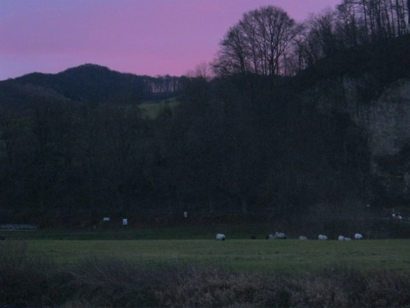 Heiligabend - die Schafe sind schon da.