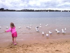 feedingthebirds