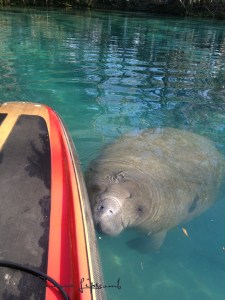 Curious about the SUP board, the juvenile says hello.