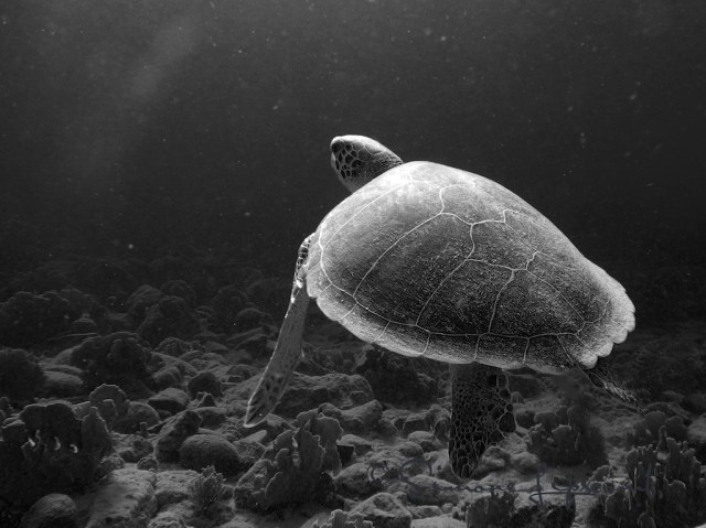 And my favorite image of this past year (besides my kids)...this green sea turtle I met in Bonaire.