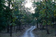 Foresta di teak