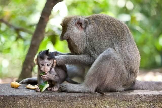 Sacred-Monkey-Forest-1