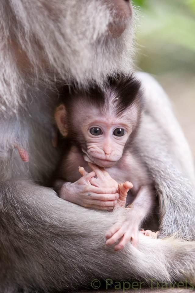 Sacred-Monkey-Forest-7