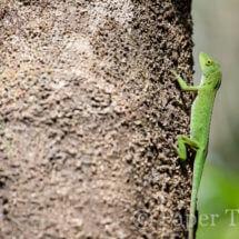 Rincon de la vieja, Costa Rica | simoneskitchen.nl