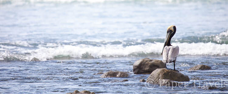 Tien dingen om niet te missen in Costa Rica | simoneskitchen.nl