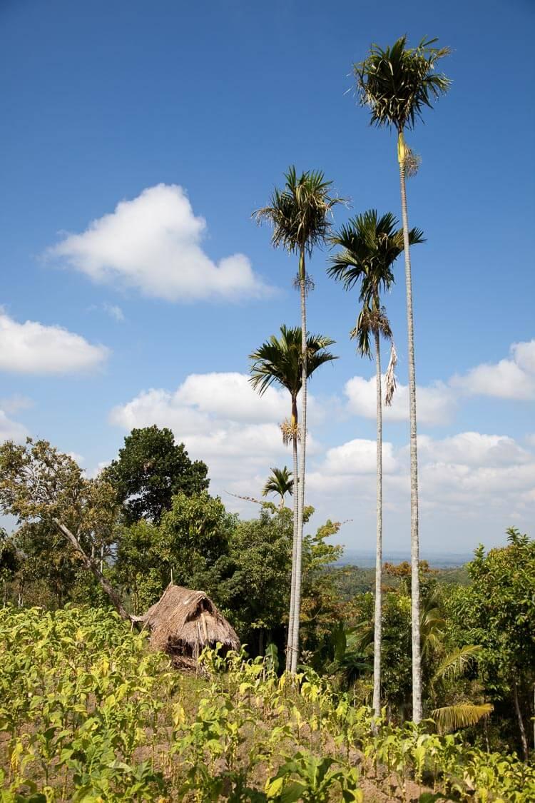 Tetebatu Lombok | simoneskitchen.nl