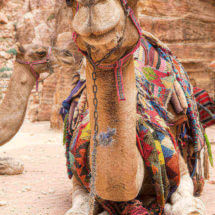 Kameel in Petra | simoneskitchen.nl