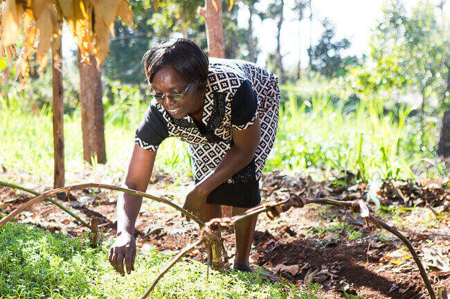 Judith Kagwiria - een van de boeren die stevia verbouwen in Kenia