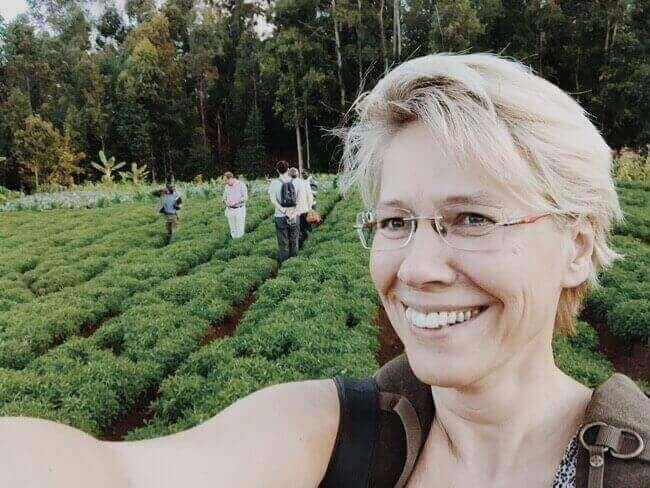 Onze eerste stevia plantage