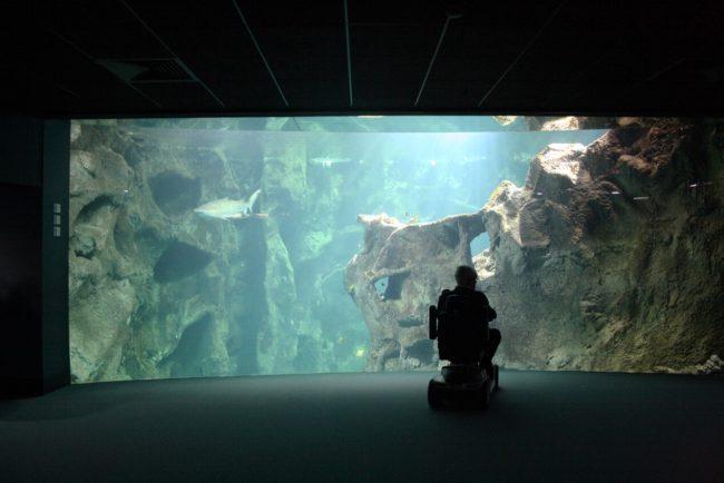 la-rochelle-aquarium